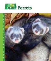 Ferrets ebook by Vickie McKimmey