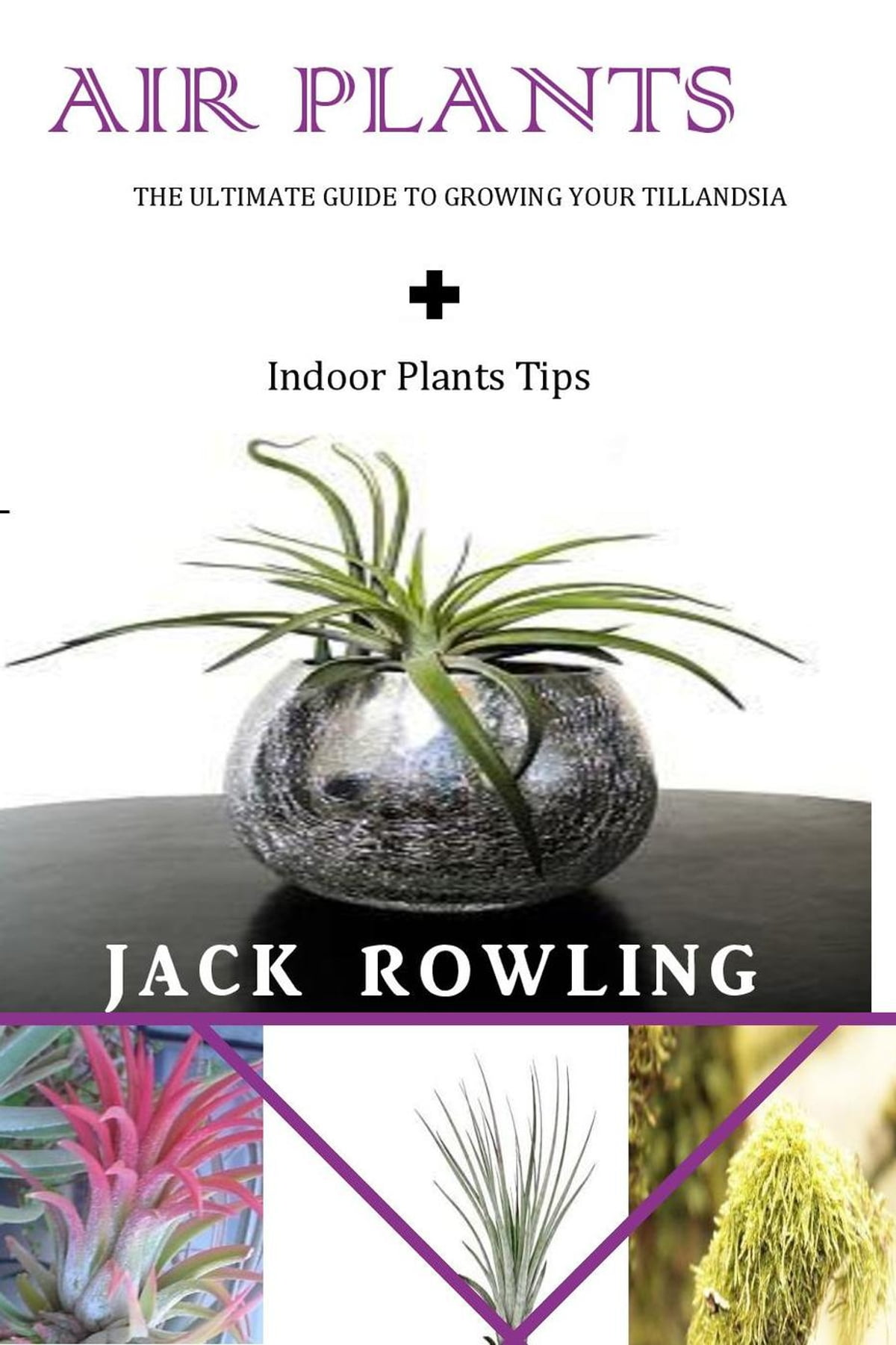 Air Plants The Ultimate Guide To Growing Your Tillandsia Indoor Tips Ebook By Jack Rowling 9781386193654 Rakuten Kobo