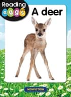 A deer ebook by Katy Pike, Amanda Santamaria