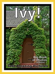 Just Ivy Plant Photos! Big Book of Photographs & Pictures of Ivy Plants, Vol. 1 ebook by Big Book of Photos