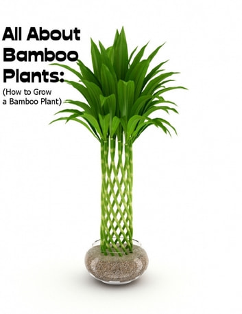 All About Bamboo Plants How To Grow A Plant Ebook By Sean