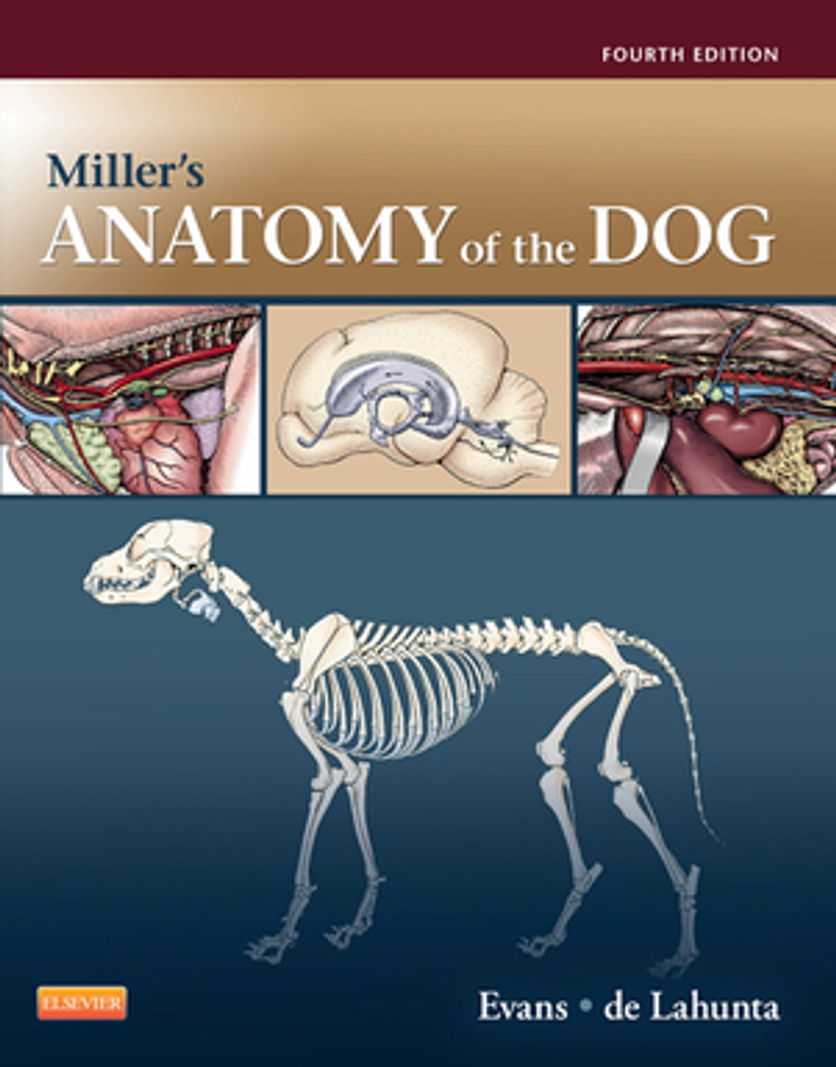 Miller\'s Anatomy of the Dog - E-Book eBook by Alexander de Lahunta ...