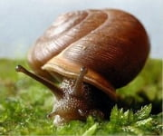 Snail Care for Beginners ebook by Santos Barber