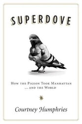 Superdove - How the Pigeon Took Manhattan ... And the World ebook by Courtney Humphries