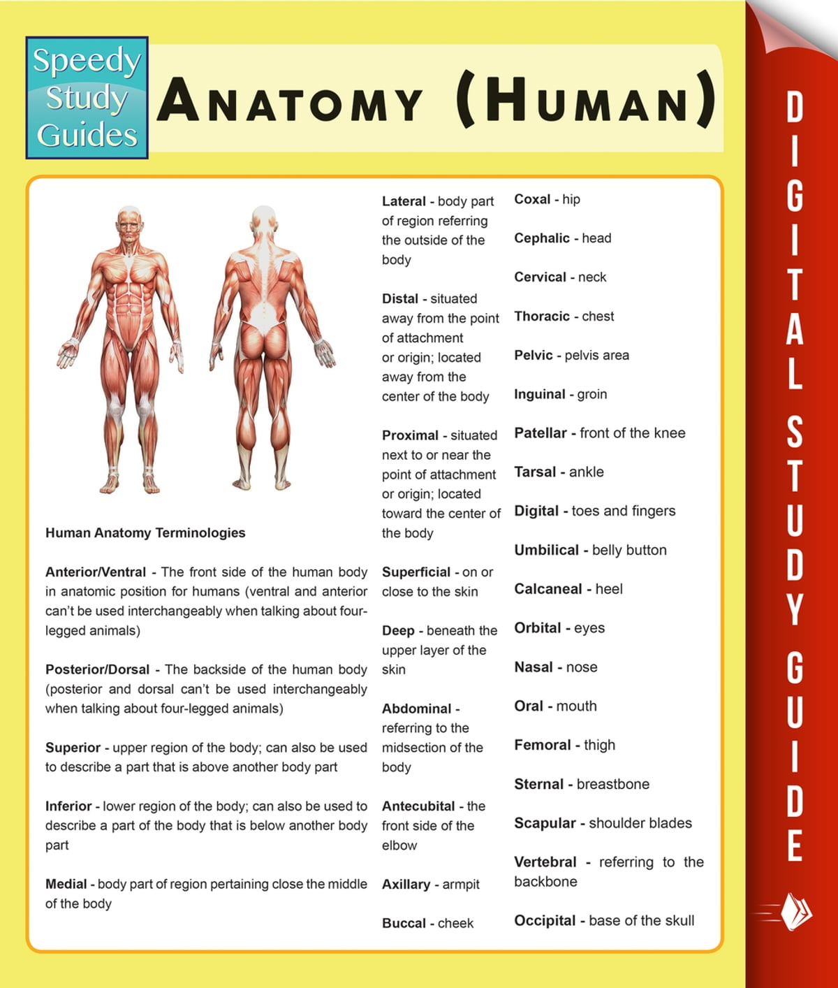 Anatomy Human Speedy Study Guides Ebook By Speedy Publishing