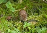 Get Rid of Voles ebook by Juan Trippe