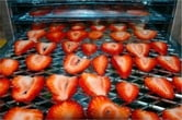 A Beginners Guide to Dehydrating Fruit ebook by Bernadette Sparks