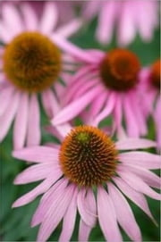 Growing Echinacea For Beginners ebook by David Torres