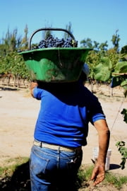 A Day in the Life of a Grapepicker ebook by amanda barnes