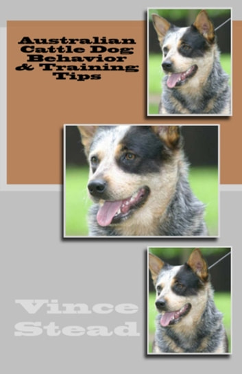 Australian Cattle Dog Behavior & Training Tips ebook by Vince Stead