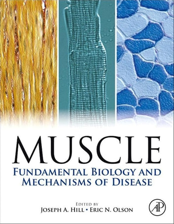 Muscle 2-Volume Set - Fundamental Biology and Mechanisms of Disease ebook by