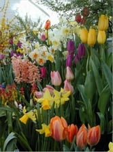 A Crash Course on Planning a Bulb Garden ebook by Ramon Harris