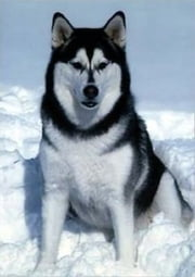 A Beginners Guide to Alaskan Malamutes ebook by Clint Hooser