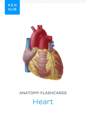 Anatomy Flashcards Heart Ebook By Kenhub 9783962980948 Rakuten Kobo