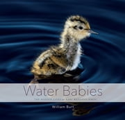 Water Babies: The Hidden Lives of Baby Wetland Birds ebook by William Burt