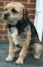 Border Terriers for Beginners ebook by Samantha Wilson