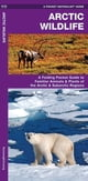 Arctic Wildlife - An Introduction to Familiar Species ebook by James Kavanagh,Raymond Leung,Waterford Press