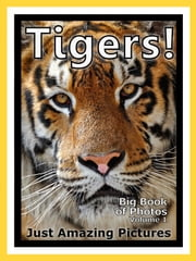 Just Tiger Photos! Big Book of Photographs & Pictures of Tigers, Vol. 1 ebook by Big Book of Photos