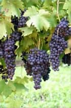 A Crash Course on How to Grow Grapes ebook by Carmen Casey