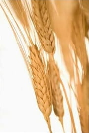 An Informative Guide About Wheat Allergies ebook by Murray Mandell