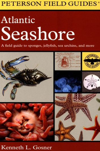 A Field Guide to the Atlantic Seashore - From the Bay of Fundy to Cape Hatteras ebook by Kenneth L. Gosner