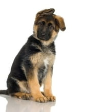 German Shepherd Training For Beginners ebook by Geraldine Pettiford