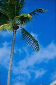 How to Plant a Palm Tree ebook by Lauren Douglas