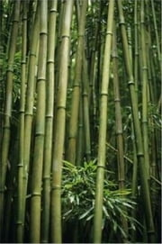 Growing Bamboo For Beginners ebook by Errol Flynn