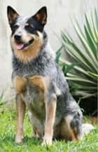 Australian Cattle Dogs for Beginners ebook by Clint Hooser