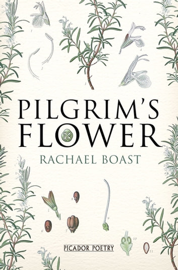 Pilgrim's Flower eBook by Rachael Boast