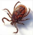 A Crash Course on How to Get Rid of Ticks by Jared Cain