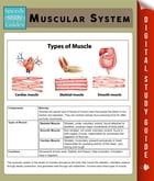 Muscular System (Speedy Study Guides) by Speedy Publishing