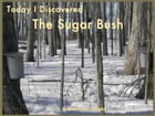 Today I Discovered The Sugar Bush by Kelly Janzen