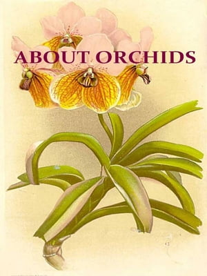 About Orchids [Illustrated] A Chat