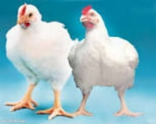 POULTRY FARMER'S GUIDE MANUAL