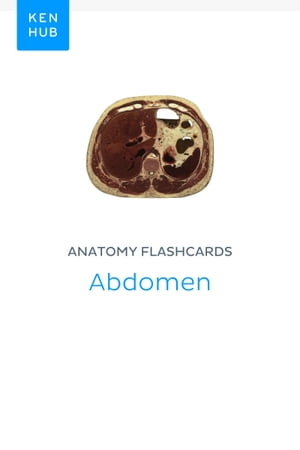 Anatomy flashcards: Abdomen: Learn all cadaveric on the go