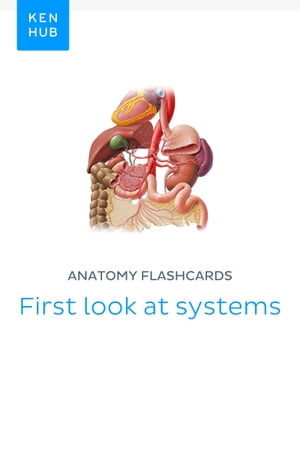 Anatomy flashcards: First look at systems: Learn all bones, arteries, veins, organs and nerves on the go