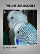 The Shelter Budgies by Patsy Whittle