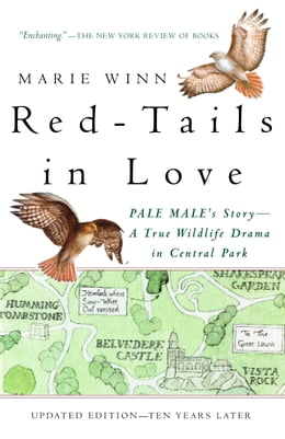 Book Red-Tails in Love: PALE MALE'S STORY--A True Wildlife Drama in Central Park by Marie Winn