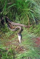 How to Get Rid of Snakes by Winston Thomas