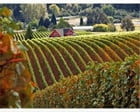 Destination Wine Country: Experience True Beauty by Tyrone Todd