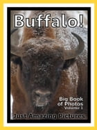 Just Buffalo Photos! Big Book of Photographs & Pictures of Buffalo and Bison, Vol. 1 by Big Book of Photos