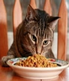 An Exclusive Guide to Making Homemade Cat Treats by Kenny Swardson