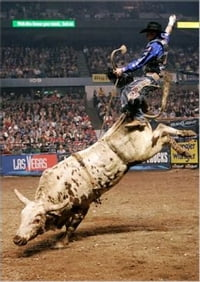 How to Ride a Bull