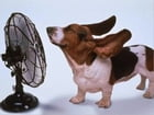 How to Treat Heat Stroke in Dogs by Mildred Doerkson