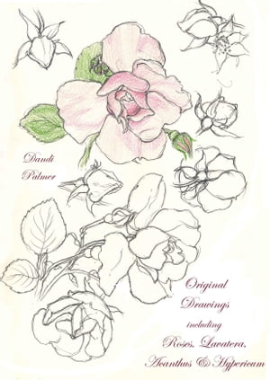 Original Drawings Including Roses, Lavatera, Acanthus and Hypericum