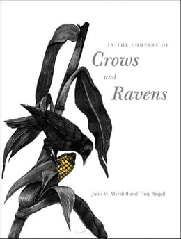 Book In the Company of Crows and Ravens by John M. Marzluff