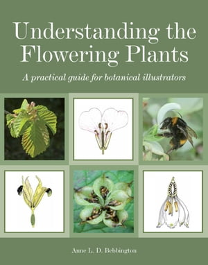 Understanding the Flowering Plants A Practical Guide for Botanical Illustrators