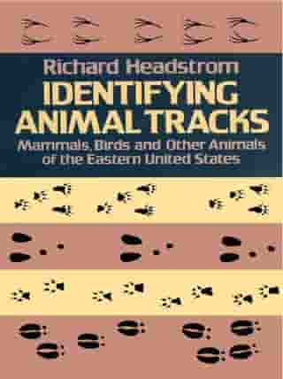 Identifying Animal Tracks: Mammals, Birds, and Other Animals of the Eastern United States by Richard Headstrom