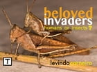 Beloved Invaders: Humans or insects ? by Levindo Carneiro